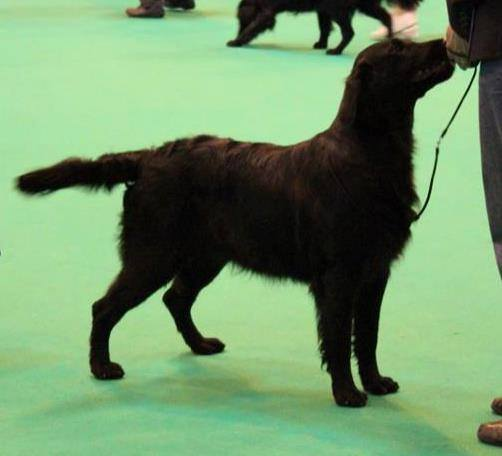Alice at Crufts