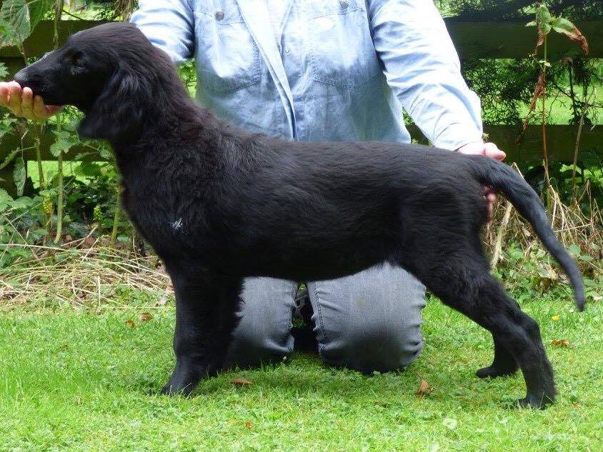 Celia as a puppy