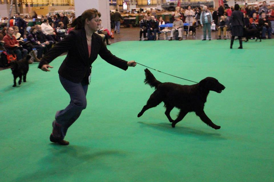 Harriet on the move at Crufts